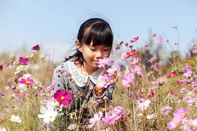 flower-nature-summer-field-grass picture material