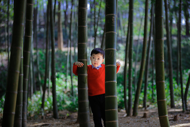 child-wood-bamboo-leaf-nature 图片素材
