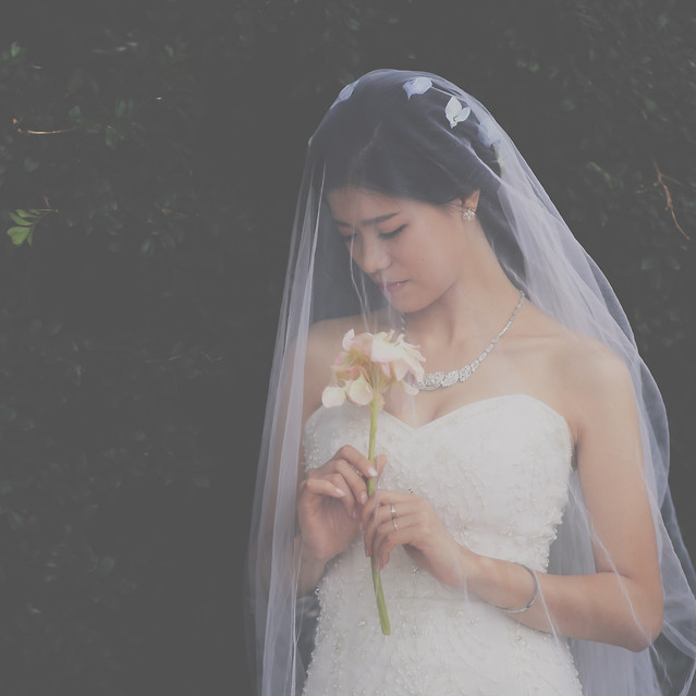 veil-bride-wedding-bridal-marriage picture material