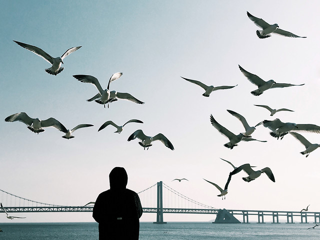 bird-seagulls-water-sea-ocean picture material