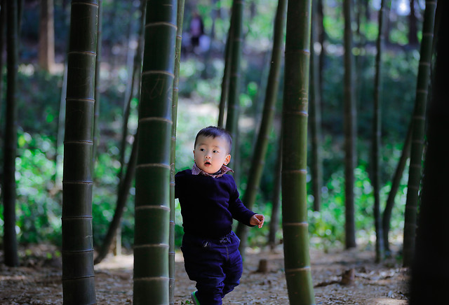 child-wood-outdoors-green-girl 图片素材