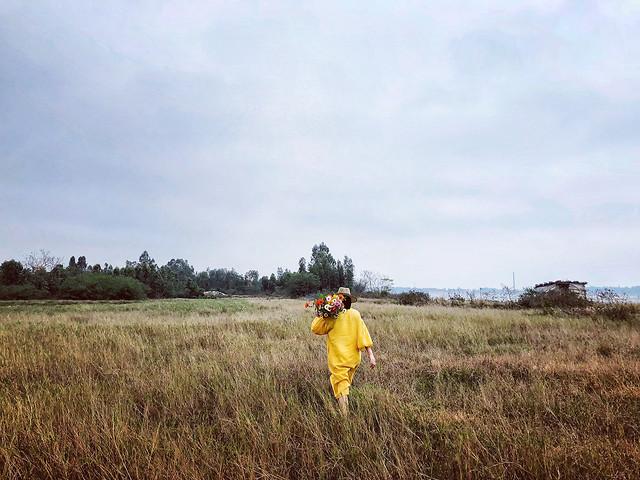 landscape-field-grass-grassland-cropland picture material