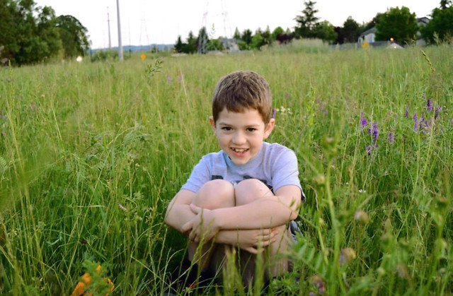 grass-nature-summer-hayfield-field picture material