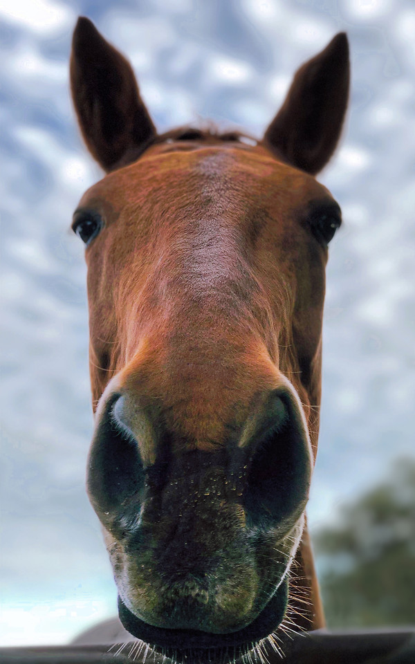 no-person-mammal-nature-cavalry-animal picture material