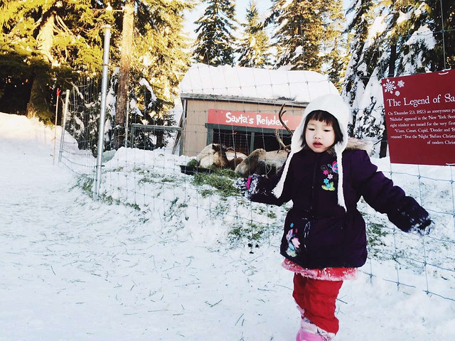 winter-snow-cold-christmas-recreation picture material