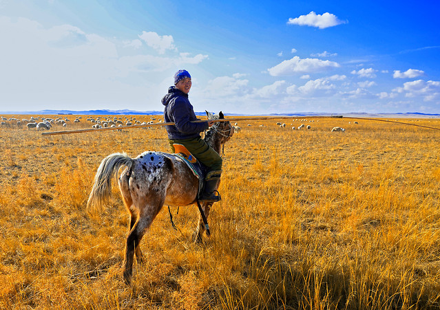grassland-ecosystem-outdoors-sky-travel picture material