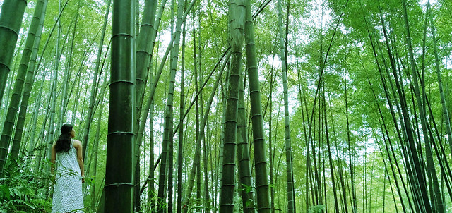 wood-bamboo-leaf-nature-lush picture material