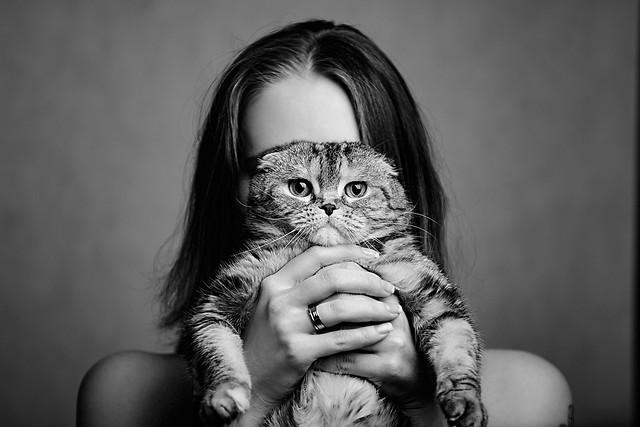 portrait-cat-monochrome-studio-one picture material