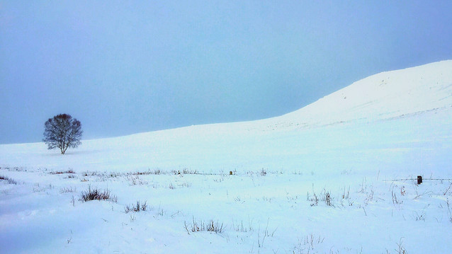 snow-winter-landscape-cold-ice picture material