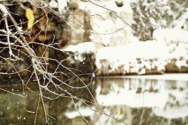 winter-nature-tree-water-outdoors 图片素材
