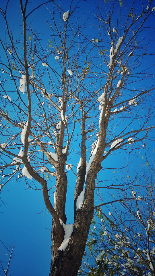 tree-no-person-wood-branch-sky 图片素材