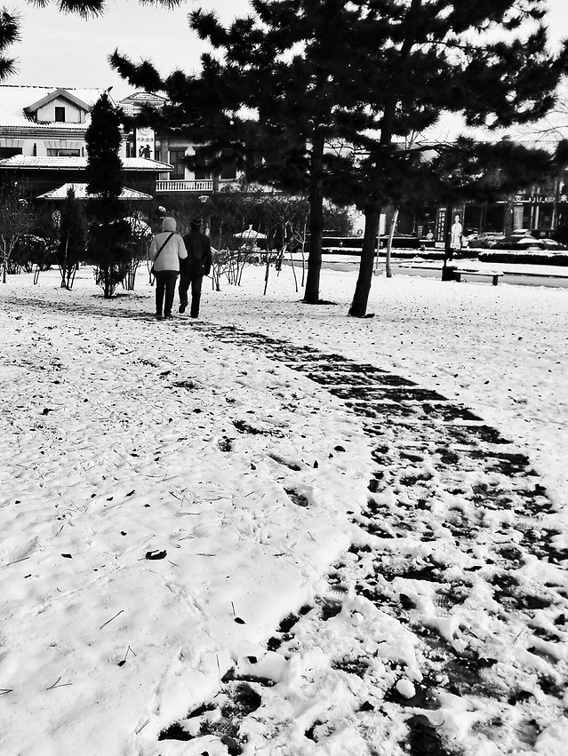 snow-winter-people-no-person-white picture material