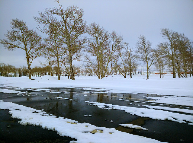 landscape-winter-snow-tree-lake picture material