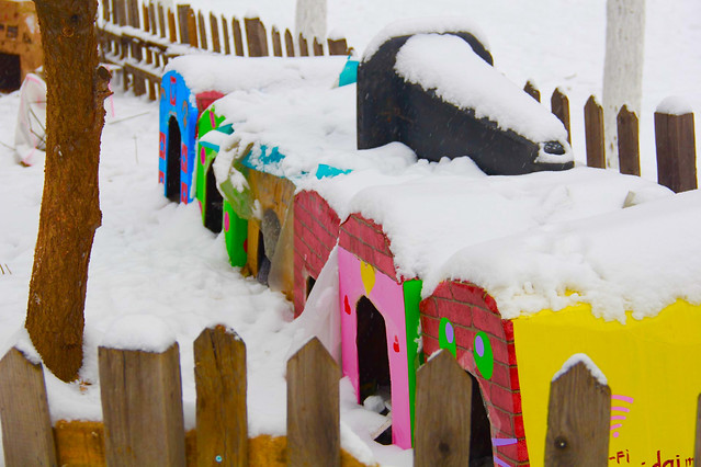 no-person-wood-winter-outdoors-snow picture material