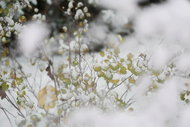 flower-winter-nature-season-tree picture material