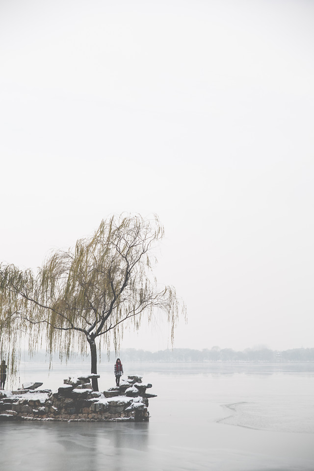 winter-fog-landscape-tree-snow picture material