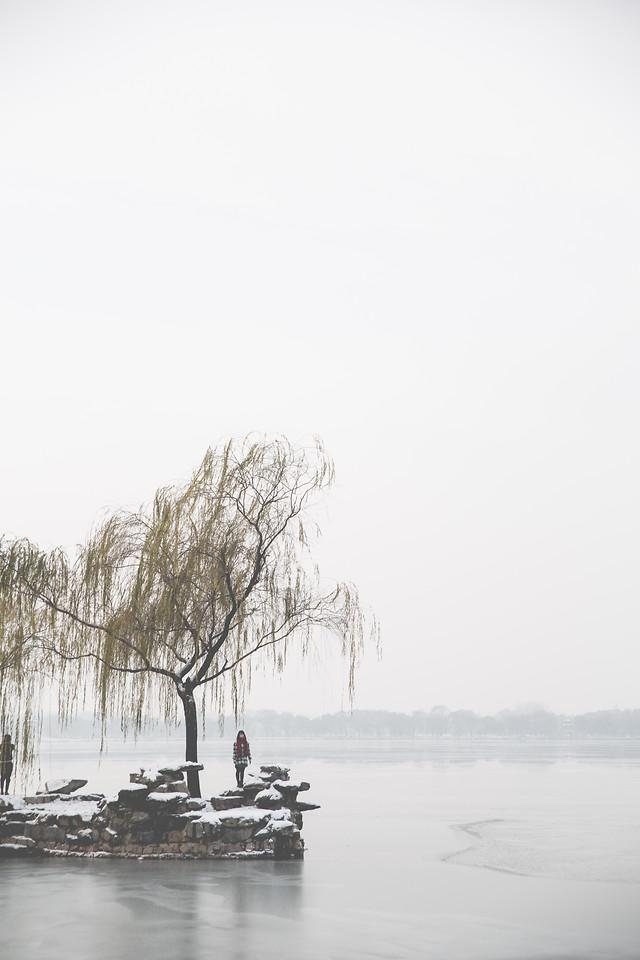 winter-fog-landscape-tree-snow 图片素材