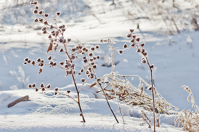snow-winter-frost-ice-nature picture material