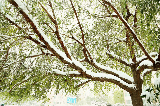 nature-tree-leaf-wood-no-person picture material