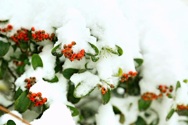 no-person-leaf-tree-winter-nature 图片素材