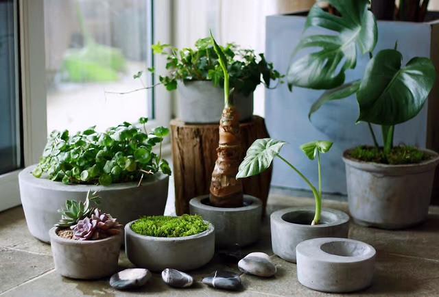 pot-flora-leaf-houseplant-flowerpot picture material