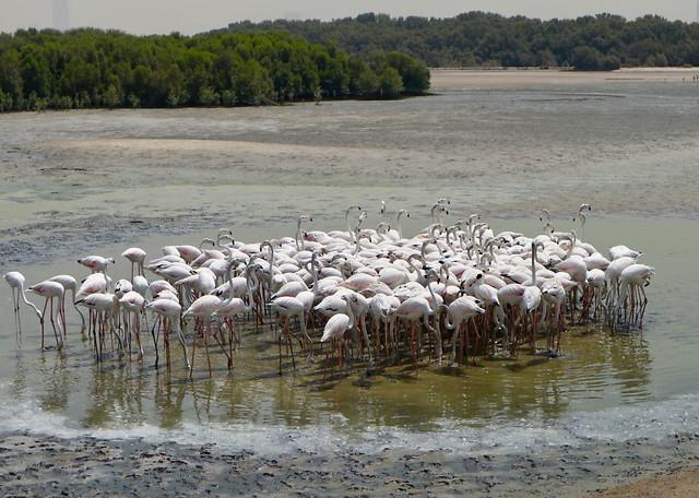 flamingo-wildlife-water-bird-neck picture material