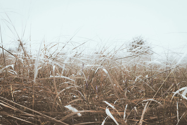 landscape-nature-field-grass-cereal picture material