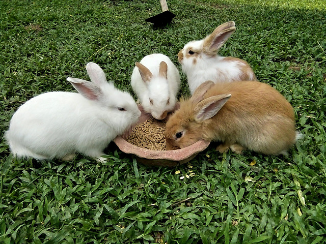 rabbits picture material