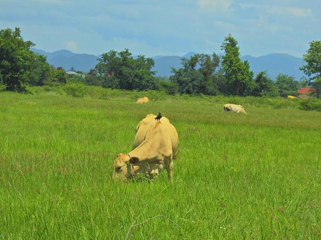 mammal-grass-no-person-grassland-pasture picture material