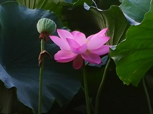 flora-flower-leaf-nature-plant 图片素材