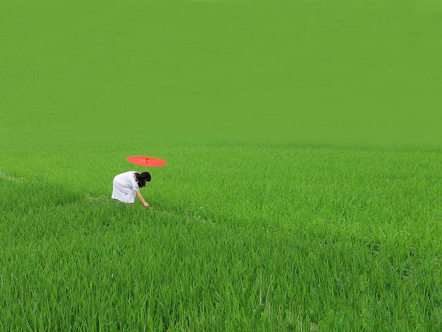 绿色如茵 picture material