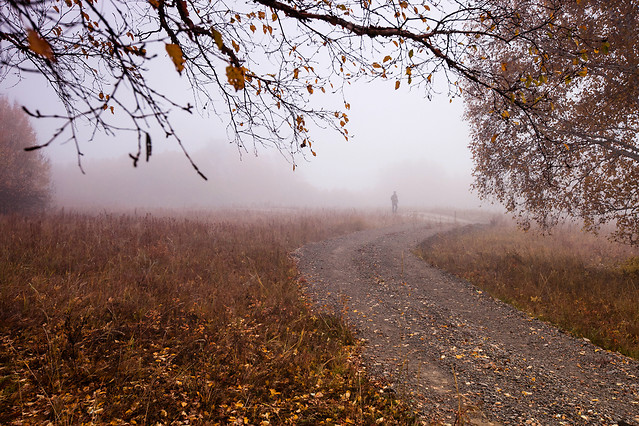 fall-fog-landscape-tree-mist picture material