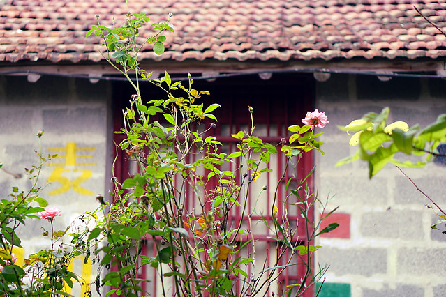 house-family-flower-window-architecture picture material