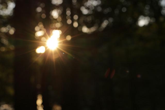 林中暖阳 picture material