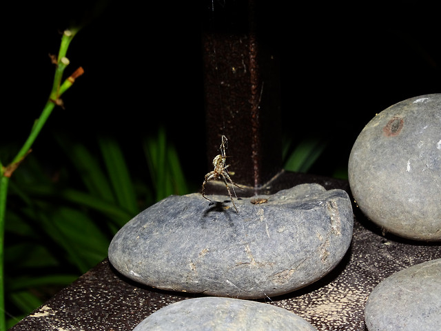 zen-no-person-balance-nature-stone picture material