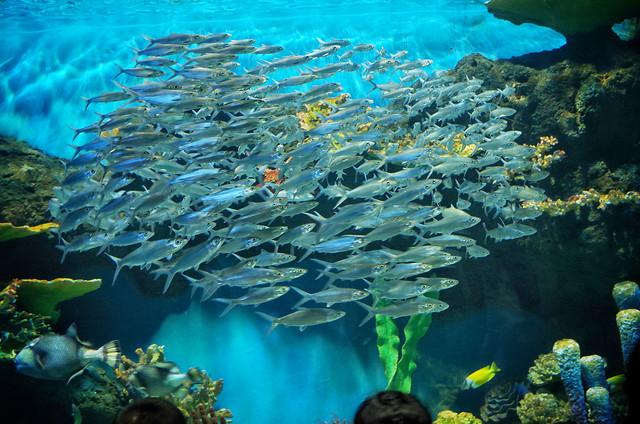 underwater-fish-coral-reef-ocean 图片素材