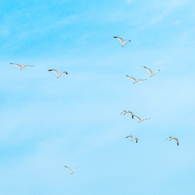 flight-bird-sky-freedom-air picture material
