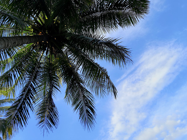 palm-tree-sky-coconut-beach picture material