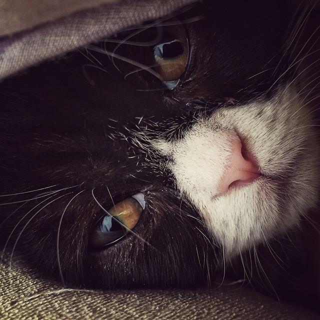 cat-kitten-eye-pet-sleep picture material