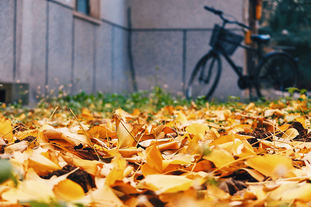 fall-leaf-no-person-yellow-outdoors picture material