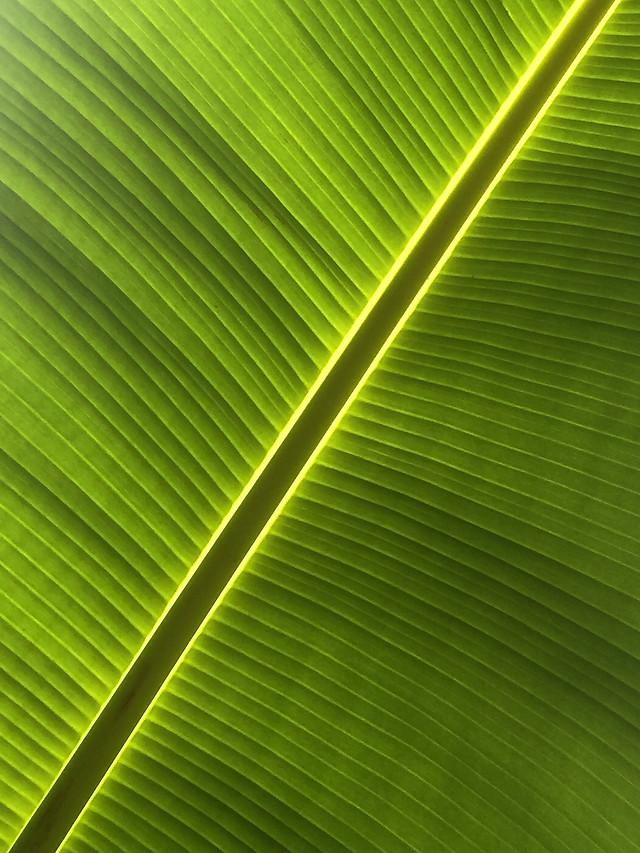 leaf-desktop-abstract-linear-flora 图片素材