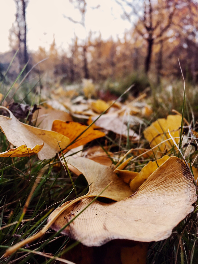 fall-wood-nature-fungus-leaf picture material