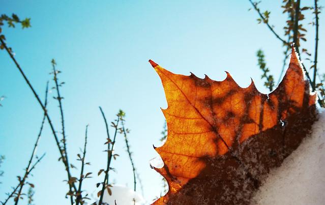 leaf-fall-tree-no-person-nature 图片素材