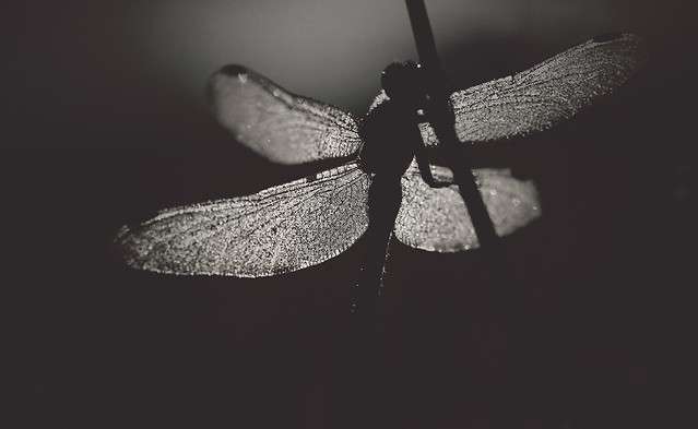 monochrome-no-person-black-white-nature-insect picture material