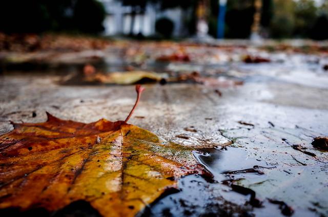 fall-wood-leaf-nature-water 图片素材