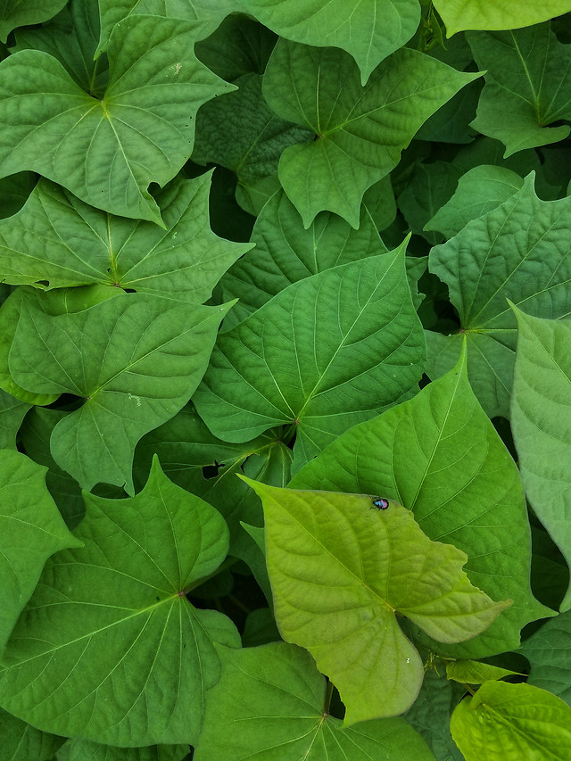 leaf-flora-growth-garden-environment picture material