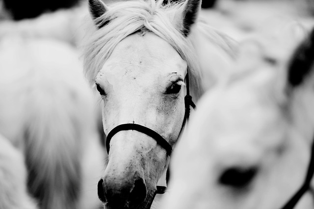 monochrome-portrait-horse-cavalry-people picture material