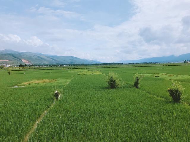 landscape-agriculture-no-person-farm-cropland picture material
