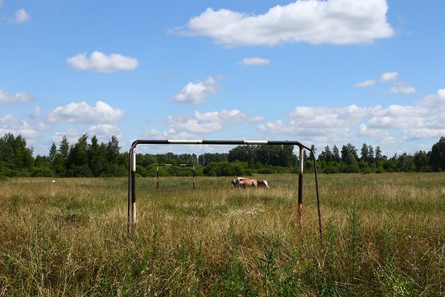 no-person-landscape-grassland-grass-cloud picture material