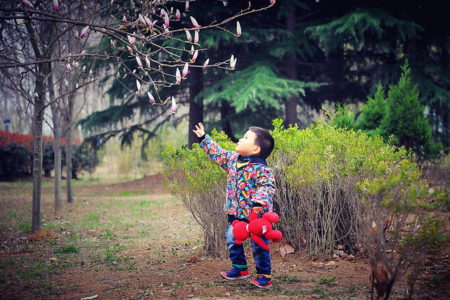 tree-wood-girl-nature-photograph picture material